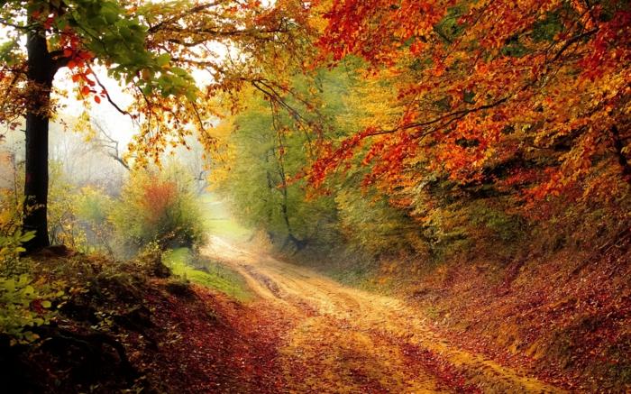imagenes otoñales, bosque de otoño, de diferentes colores con el suelo lleno de hojas