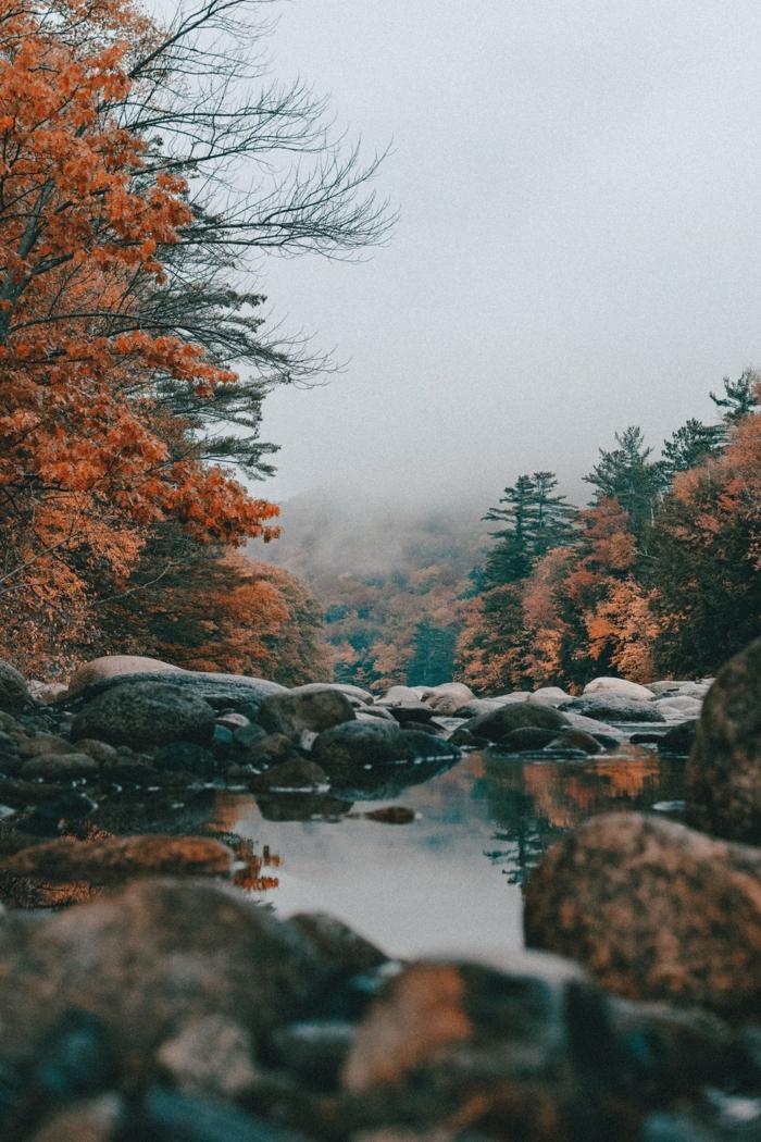 imagenes otoñales, rio con piedras redeado de bosques y pinos de diferentes colores, niebla