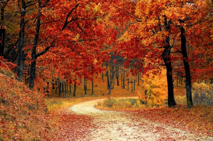 imagenes otoñales, camino en el bosque lleno de hojas de diferentes colores, arboles de otoño