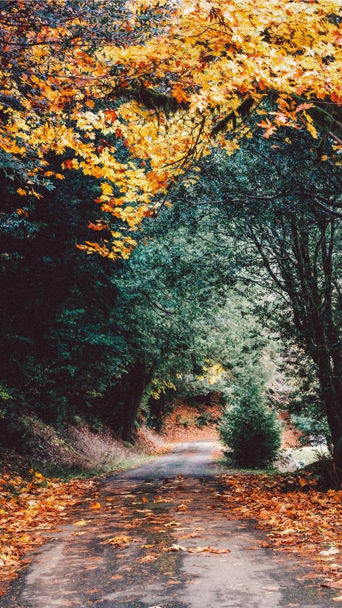 imagenes otoñales, camino lleno de hojas de otoño secas de diferentes colores con arboles amarillos