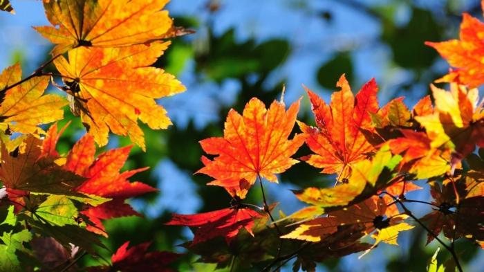 imagenes otoñales, hojas de otoño de diferentes colores con el fondo del cielo azul celeste