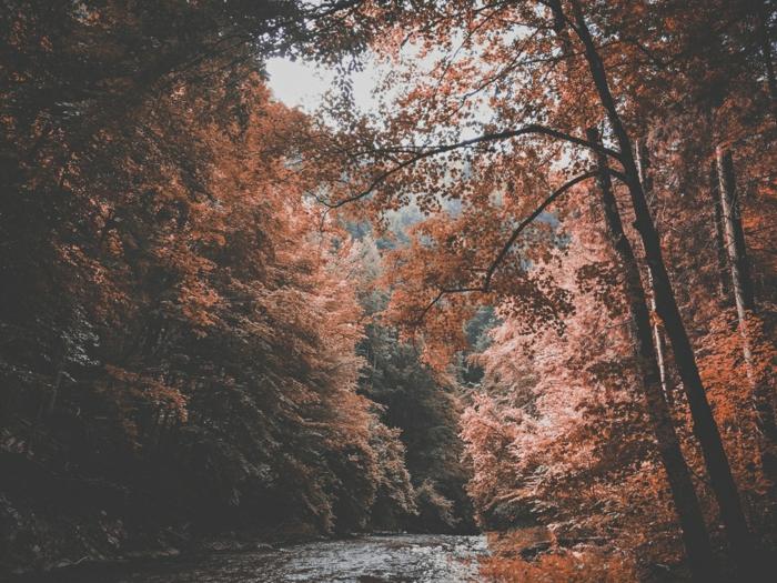 paisajes de ensueño, rio en el bosque con los arboles alrededor de colores de otoño