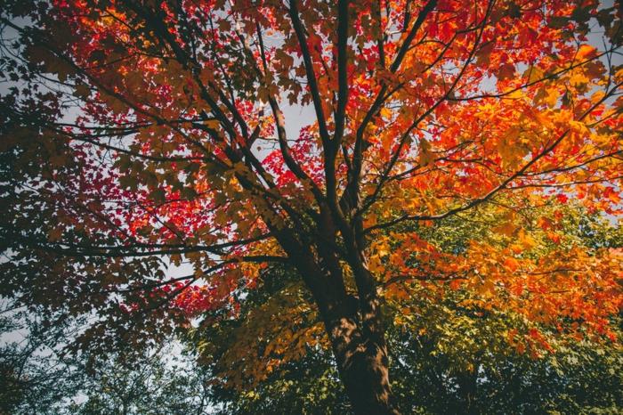 paisajes de ensueño, arbol con hojas de diferentes colores colgando del arbol , un otoño colorido