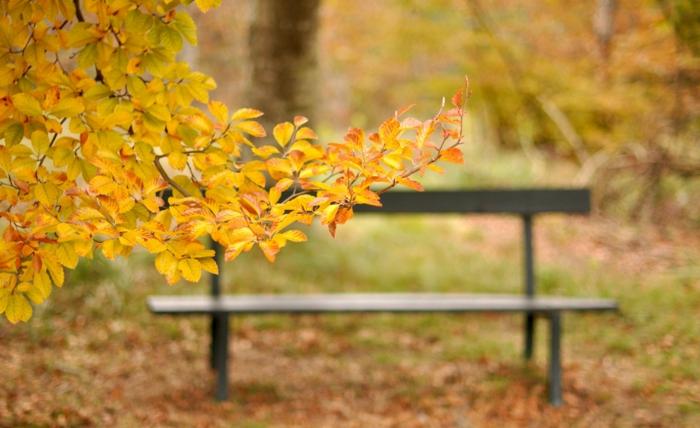 paisajes de otoño, banco en el parque de madera con hojas amarillas en las ramas de un arbol