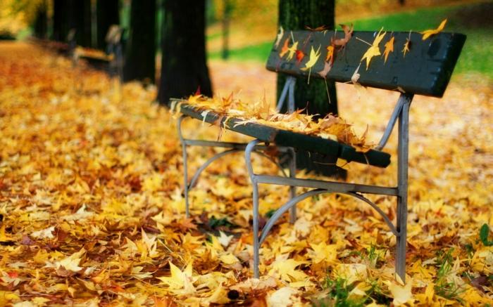 paisajes de otoño banco de madera lleno de hojas amarillas y el suelo cubierto de hojas secas