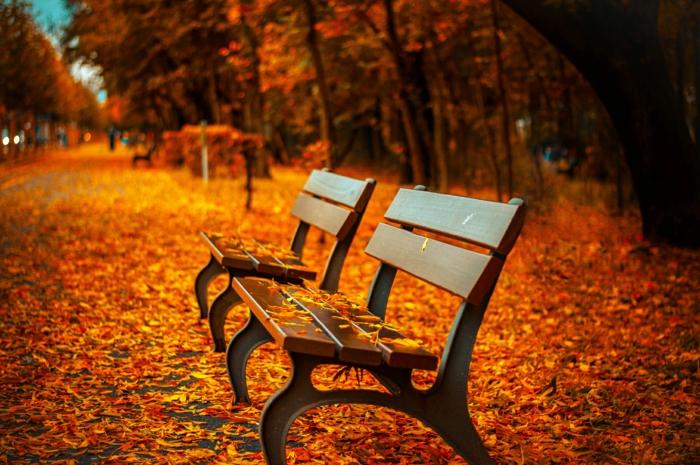 paisajes de otoño banco de madera, suelo lleno de hojas rojas, amarillas y naranjas, bosque con arboles