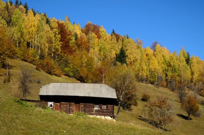 paisajes de otoño, casa de madera en la montaña con arboles verdes rodeado y con la hierva verde