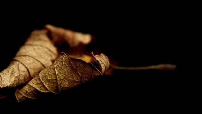 paisajes de otoño, hoja amarilla arrugada en el suelo con fondo negro, foto bonita hecha