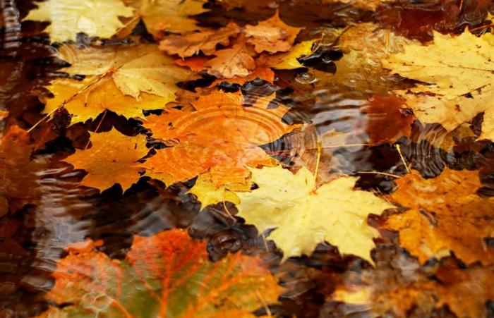 paisajes de otoño, hojas de otoño esparcidas en el agua de diferentes tamaños, bonitos