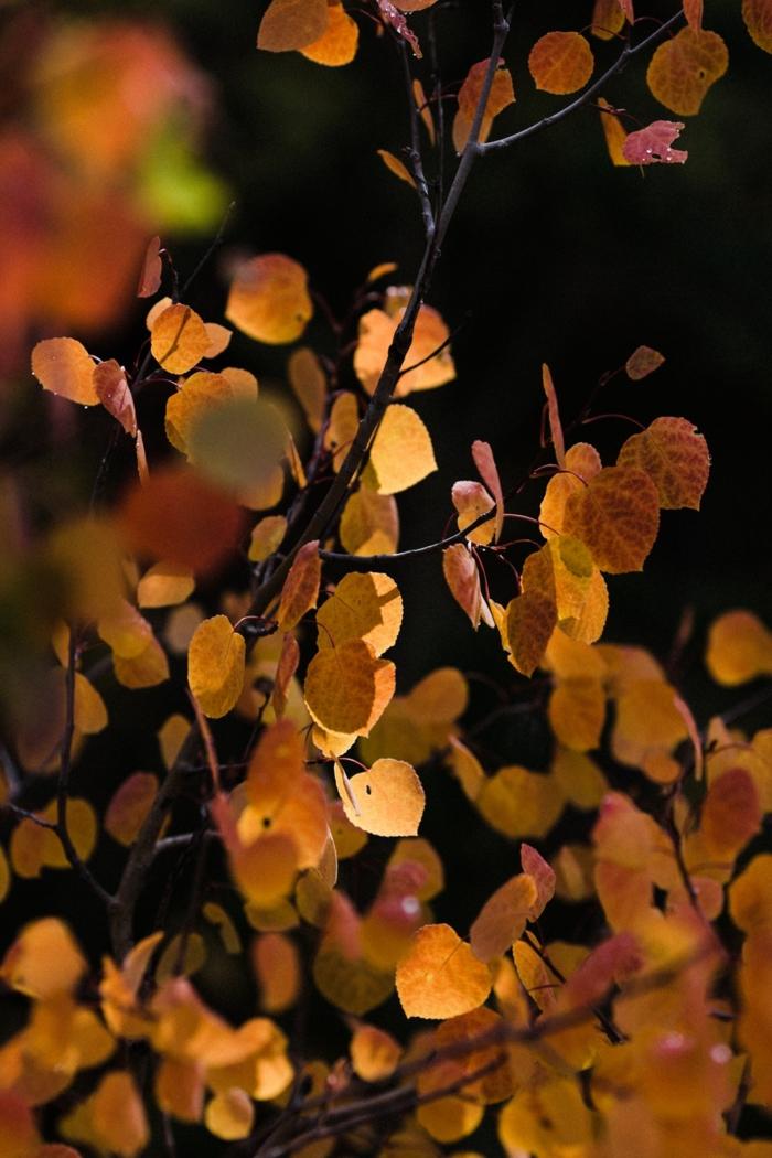 paisajes de otoño, hojas en las ramas de diferentes colores otoñales, bonitas y fondo borroso