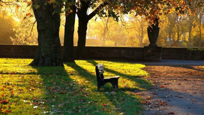 paisajes hermosos, cesped verde, arbol encima del banco de madera, suelo de asfalto