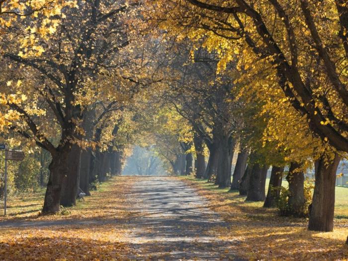 paisajes hermosos, camino lleno de hojas otoñales caidas con los arboles alrededor del camino