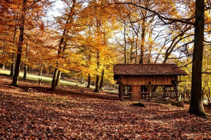 paisajes hermosos, suelo lleno de hojas secas de otoño y casa de madera con arboles rodeada