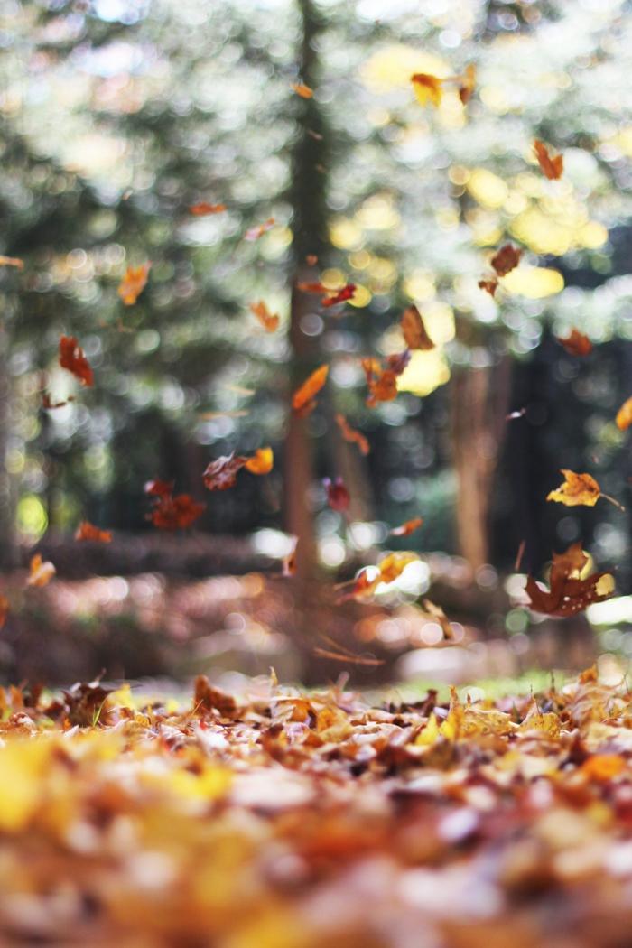 paisajes hermosos, el bosque con las hojas esparcidas por el suelo y el fondo borroso