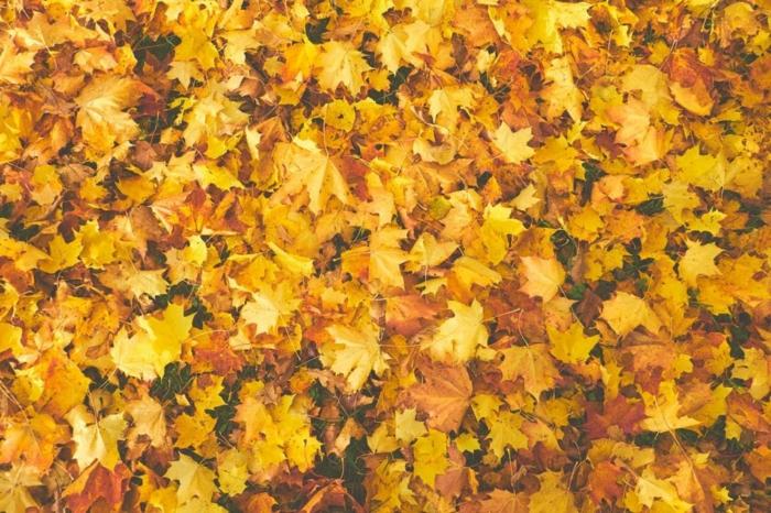 paisajes hermosos, suelolleno de hojas amarillas secas de diferentes colores esparcidas por el suelo