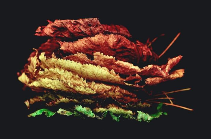 paisajes hermosos, hojas secas de diferentes colores ordenadas una encima de la otra