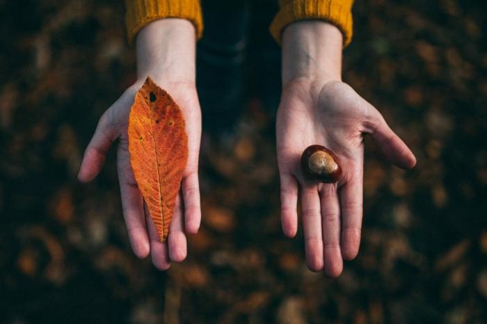 paisajes hermosos, manos esparcidas sujetando una hoja fina de otoño y una castaña