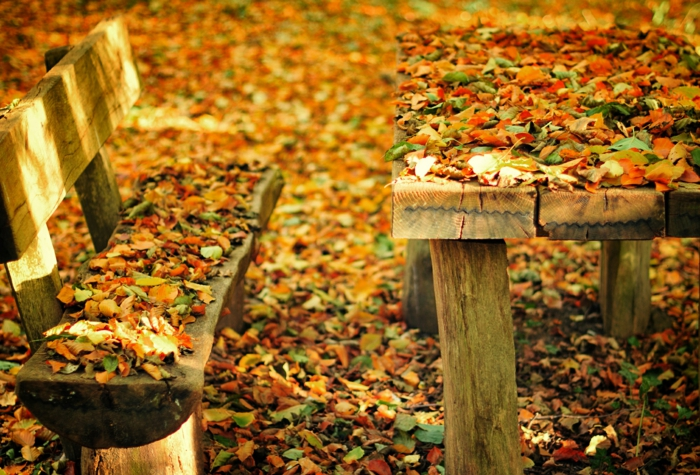 paisajes otoñales, banco y mesa de troncos de madera llenos de hojas de diferentes colores otoñales