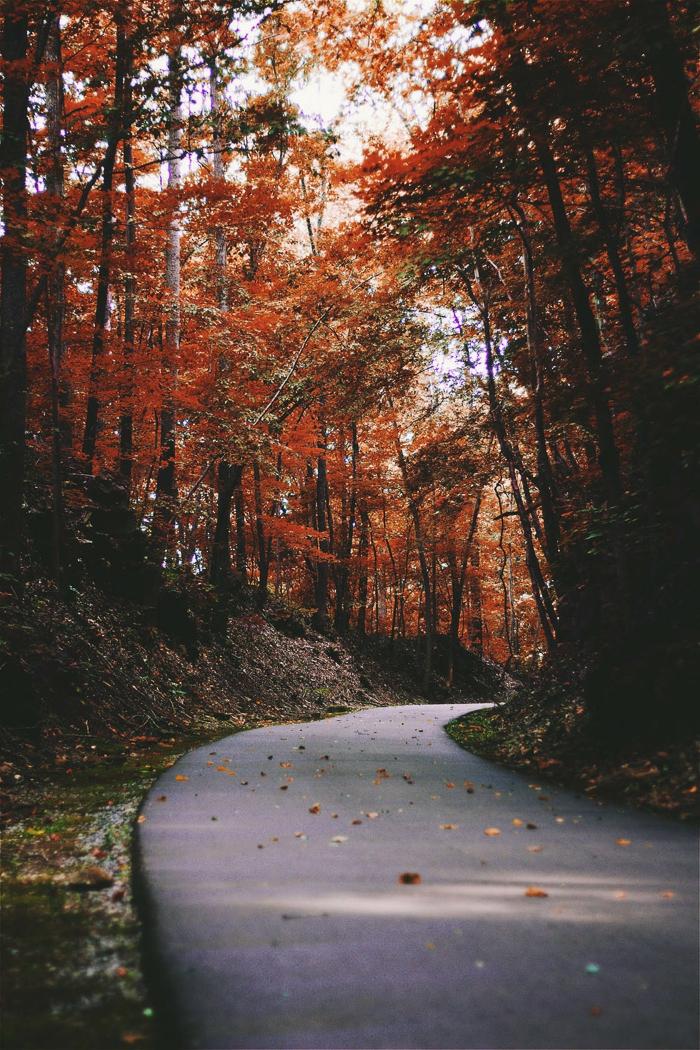 paisajes otoñales, camino de asfalto redeado con bosques con hojas otoñales de diferentes colores