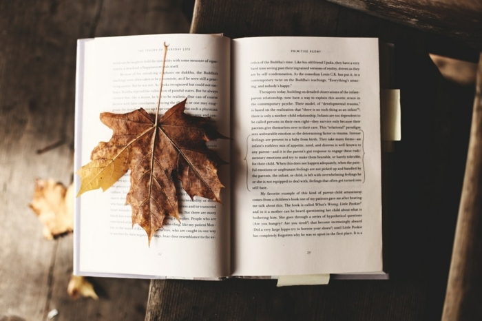 paisajes preciosos, libro con una hoja de otoño encima de el, hoja de color amarillo arrugada