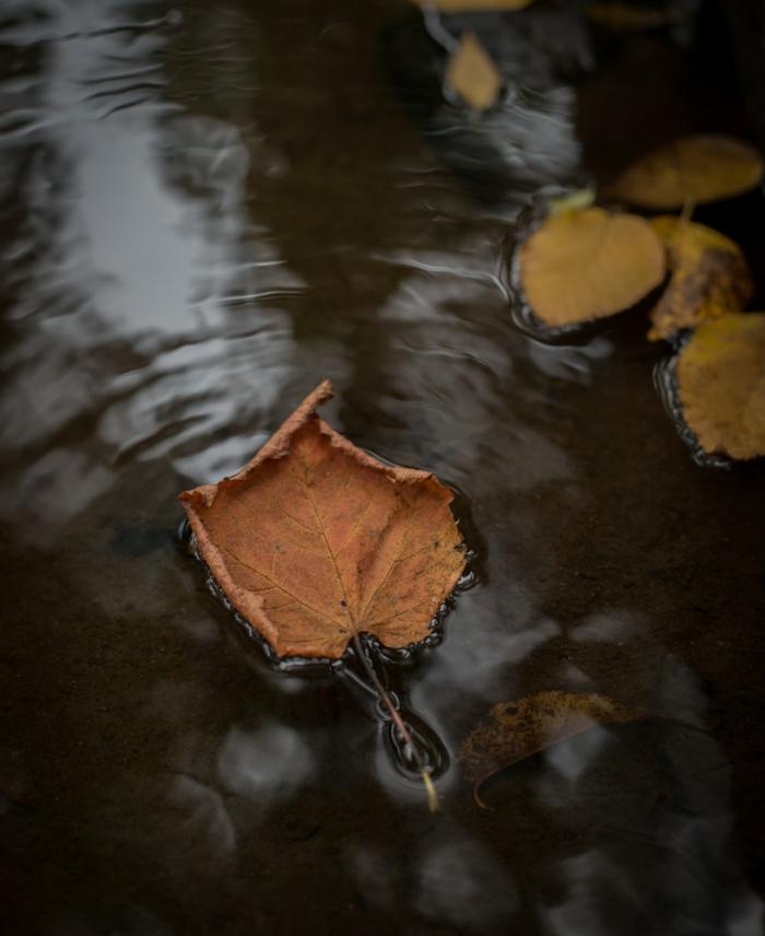 paisajes preciosos, hojas de otoño esparcidas en el agua, bonita imagen otoñal