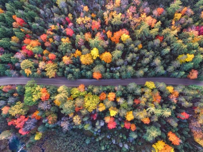 paisajes preciosos, foto hecha desde el cielo a los arboles de diferentes colores otoñales