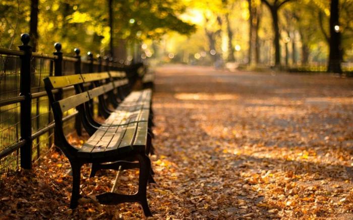 paisajes relajantes, hojas otoñales secas esparcidas por el suelo, bancos de madera por todo el parque