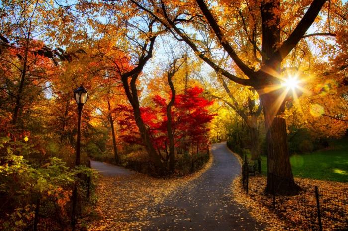 paisajes relajantes, camino lleno de hojas secas con arboles rodeando el parque natural