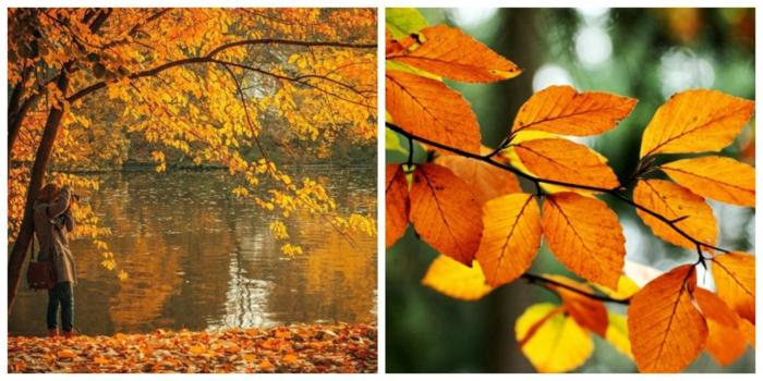 paisajes relajantes, collage de dos fotos otoñales con una chica haciendo una foto y hojas amarillas