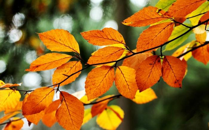 paisajes relajantes, hojas naranjas en una rama con el fondo borroso verde