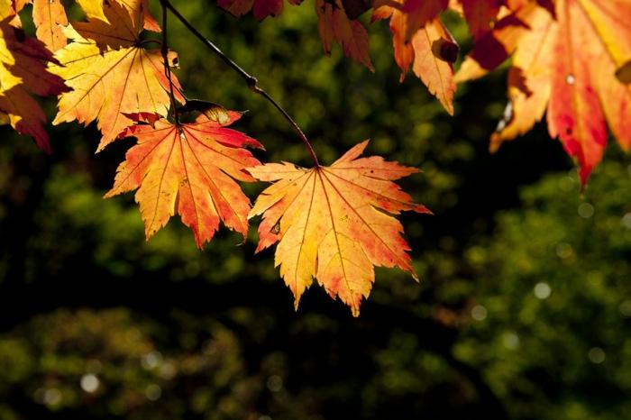 paisajes relajantes, hojas de otoño en una rama con el fondo de color verde detras borroso