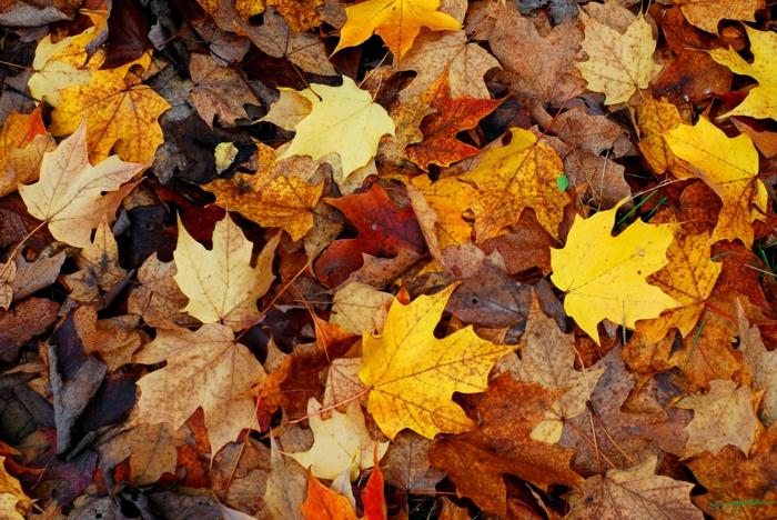 paisajes relajantes, hojas de diferentes colores esparcidas por el suelo, hojas secas de otoño