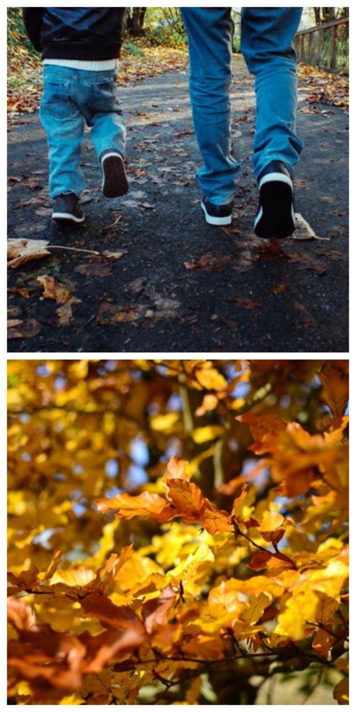 paisajes de otoño con padre e hijo andando en la carretera, hojas de otoño en el arbol