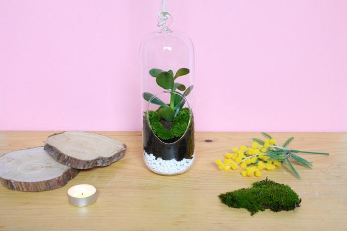 ideas de trabajos manuales desde casa, terrario DIY hecho a mano, tutoriales con ideas caseras