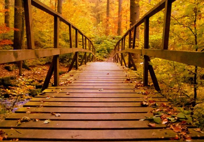 puente de madera en el bosque con hojas secas de colores esparcidas por el puente, bosque al lado