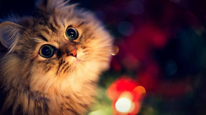 estupendas fotos de navidad con mascotas, gato super bonito con luces navideñas, descargar fotos gratis