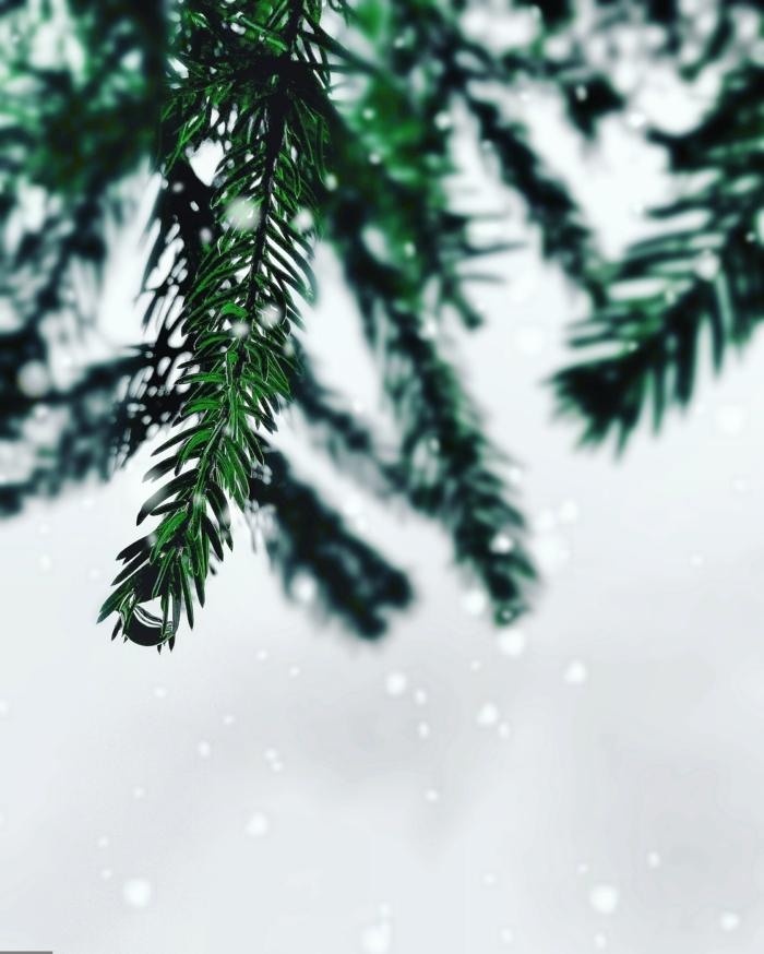 paisajes navideños estupendos, árbol de pino en la nieve, postales de navidad originales