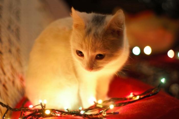 fotos navideñas con gatos para descargar y enviar a tus amigos, tarjetas de navidad originales