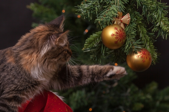 gato jugando con los adornos navideños en dorado y rojo, tarjetas de navidad originales para descargar