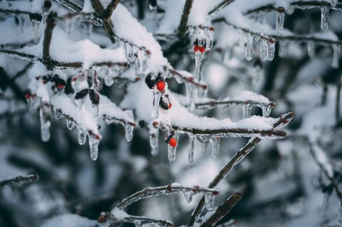 adorables paisajes de navidad para enviar como una tarjeta navideñas, árbol navideño con nevado
