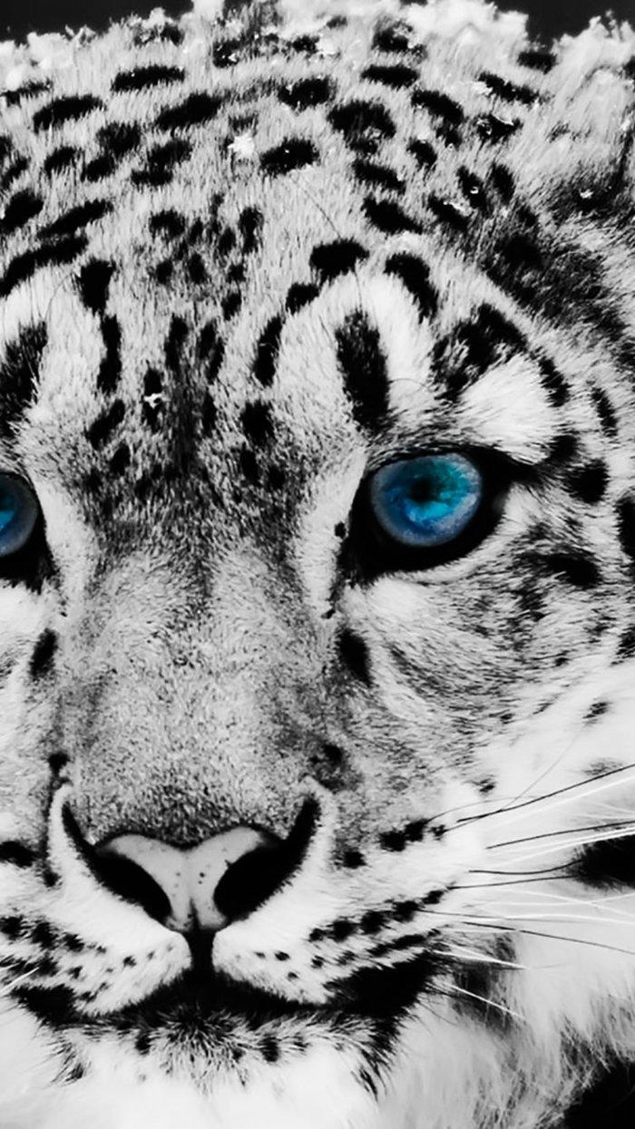 ideas de fondos iphone que puedes descargar fácil, fotos de animales bonitos, tigre con ojos azules