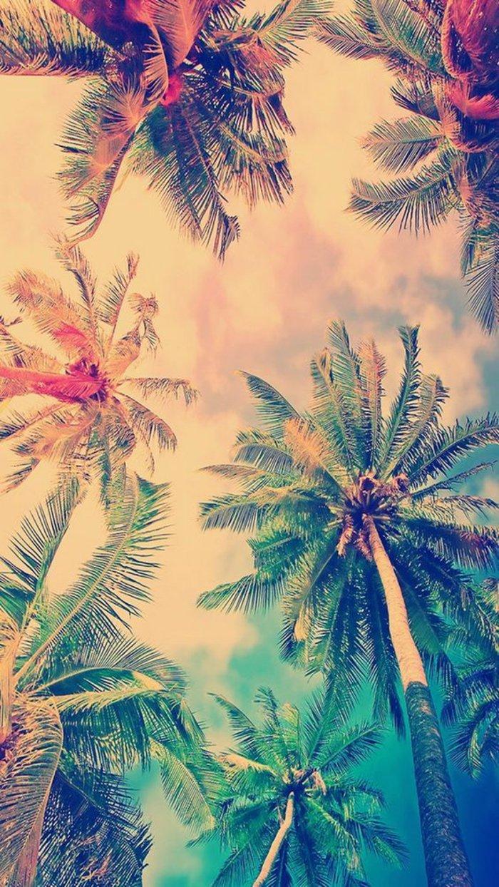 dibujos de fondo pantalla iphone con palmeras, paisajes de naturaleza bonitos para tu teléfono