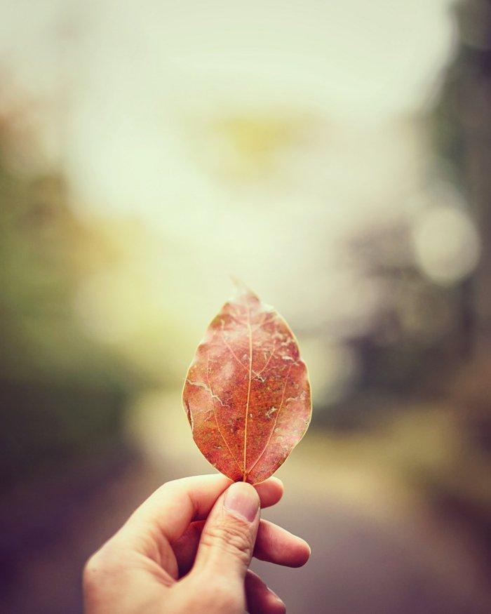 paisajes otoñales que enamoran, hojas caídas bonitas, propuestas de fondos de pantalla iphone
