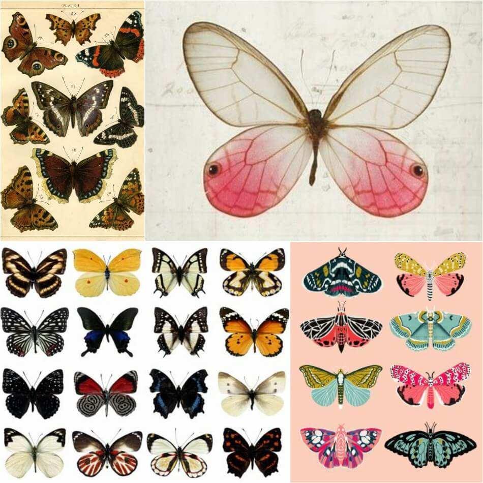 bonitos dibujos de tatuajes mariposa en colores, ideas de tattoos con mariposas super originales