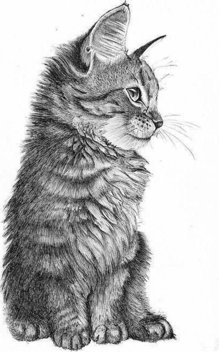 los mejores ejemplos de dibujos de animales a lapiz, dibujos a lapiz faciles y bonitos para descargar
