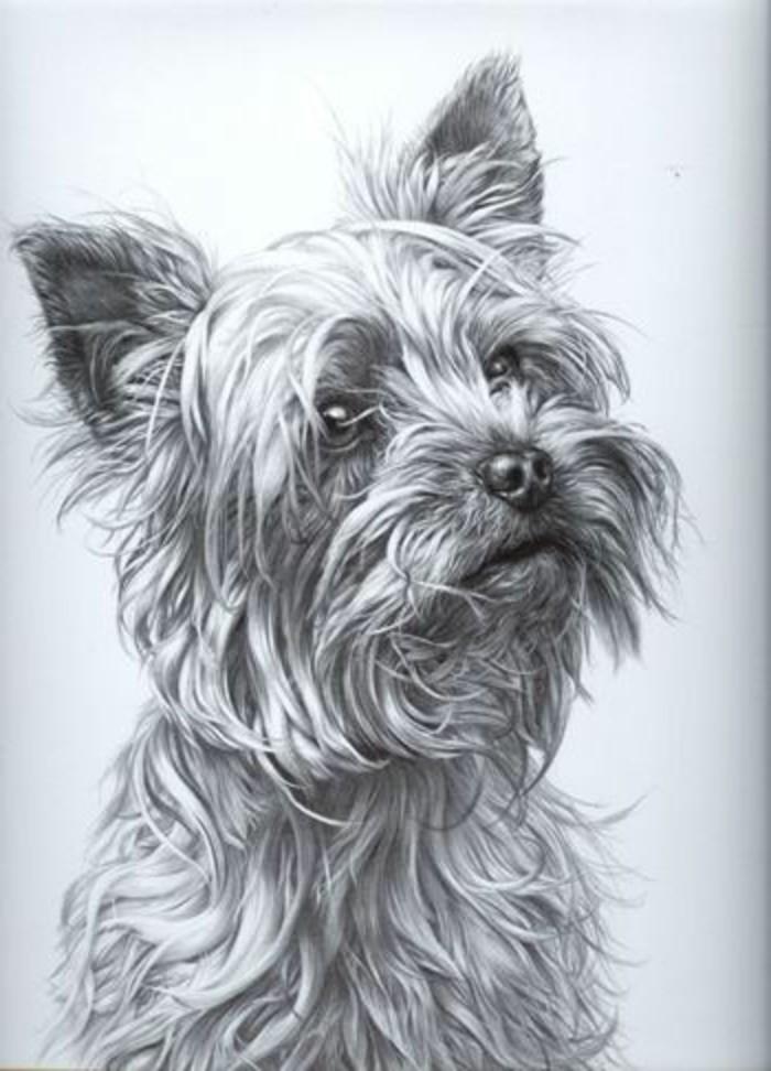adorables propuestas de dibujos a lapiz faciles hipperrealistas, retrato de perro, dibujso de animales bonitos