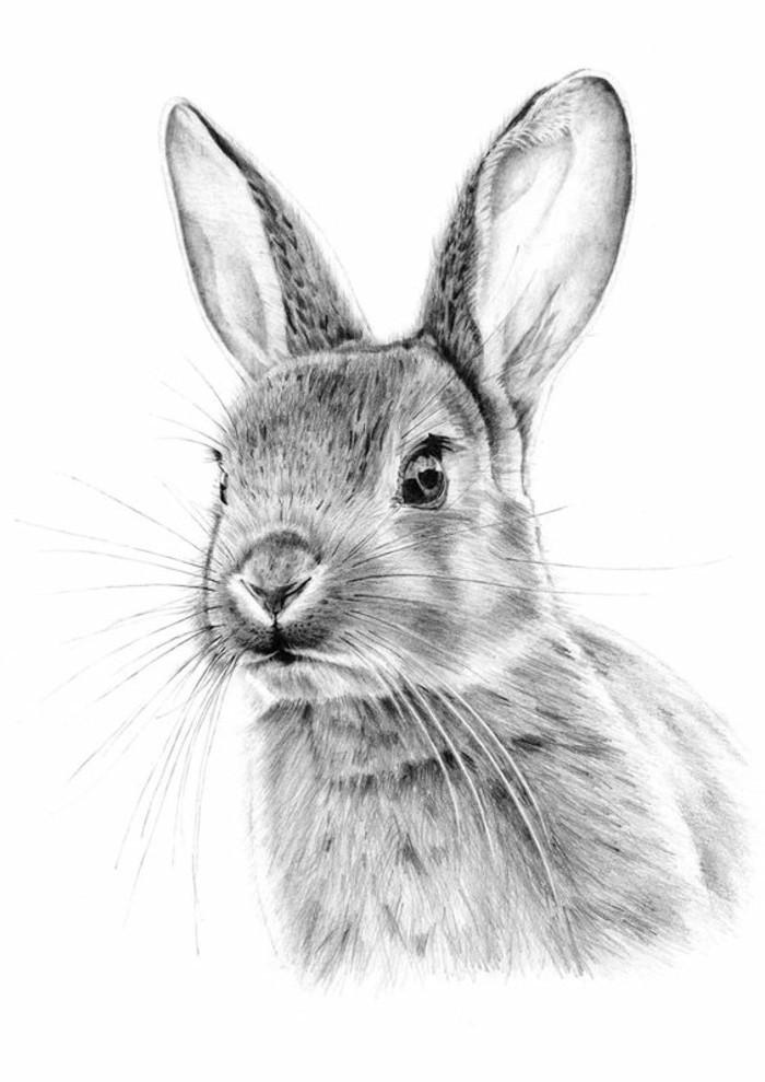 dibujos super realistas de animales, dibujos a lápiz fáciles y bonitos, cómo dibujar un conejo