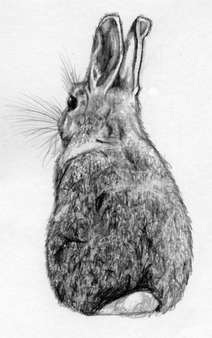 pequeño conejo dibujado a lápiz en estilo realista, los mejores ejemplos de dibujos sombreados