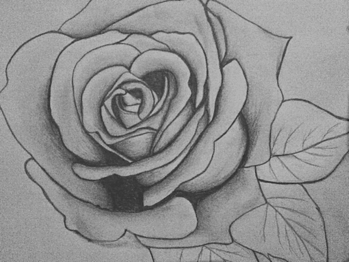 ejemplos de dibujos bonitos a lapiz, aprender a dibujar para principiantes, precioso dibujo de rosa florecida