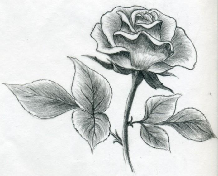 dibujos de rosas super bonitos, dibujos bonitos a lapiz, técnicas para aprender a dibujar con lápiz